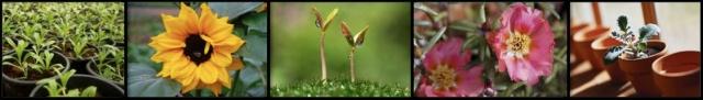 plant banner2